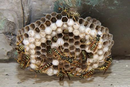 Come eliminare le vespe